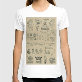 Butterfly Life Cycle T-shirt