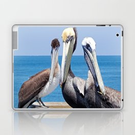 Larry, Curly and Moe Pelicans Laptop & iPad Skin
