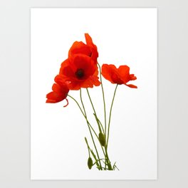 Delicate Red Poppies Vector Art Print