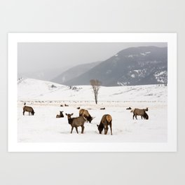 Herd of Elk in Wyoming on a Snowy Winter Day Art Print