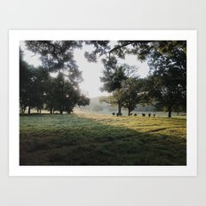 Through The Morning Art Print