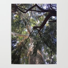 Ozzy big tree Poster