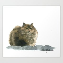 Cat on the rocks Art Print