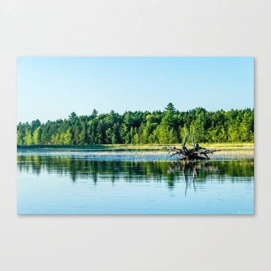 Driftwood Reflection Canvas Print