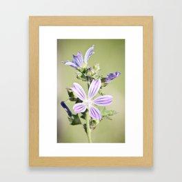 Malva Framed Art Print