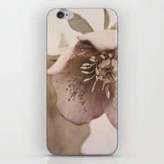 lenten rose iPhone & iPod Skin