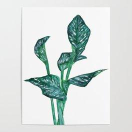 green calla lily Poster