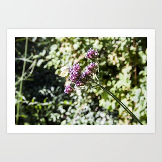 In the Garden.. Art Print