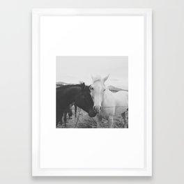 Horse Pair Framed Art Print