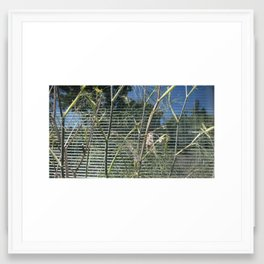 Fennel with Reflections and Blinds Framed Art Print