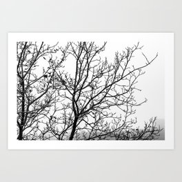 Black and white branches on a foggy morning Art Print