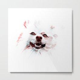 Double Vision Pomeranian Metal Print