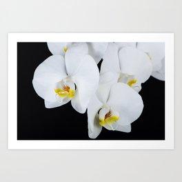 Night Orchid Art Print