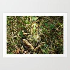 The frog Art Print