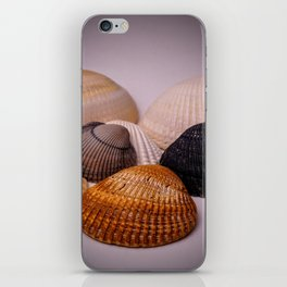 Different color shell iPhone Skin
