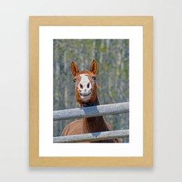 Horse Humour Framed Art Print