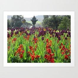 Powerscourt Tulips Art Print