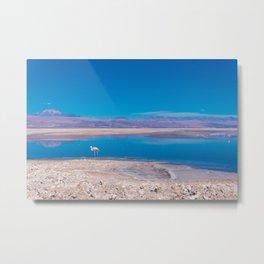 Flamingos in the Desert, San Pedro de Atacama, Chile Metal Print