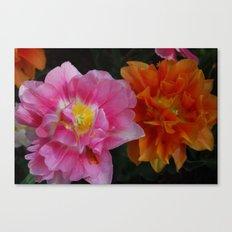 Pinkorange Canvas Print