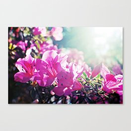 A Flare of Spring Canvas Print