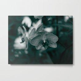 Hawaiian Orchid Metal Print