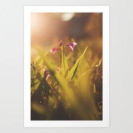 Morning Flowers (2) Art Print