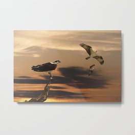 Osprey at Sunset Metal Print