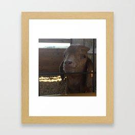 You Really get my Goat Framed Art Print