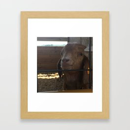 You Really get my Goat Framed Art Print