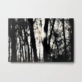 Landscape black and white whimsical Photograph Print – morning tree silhouette at central park.  Metal Print