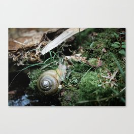 A Snail's Home Canvas Print