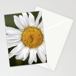 A White Flower Stationery Cards