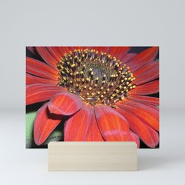 Burnt Orange Gerber Daisy Mini Art Print