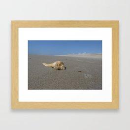 Conch Framed Art Print