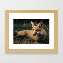 Beautiful fox Framed Art Print