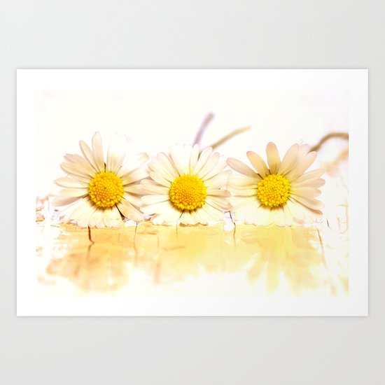 Sunny daisies Art Print