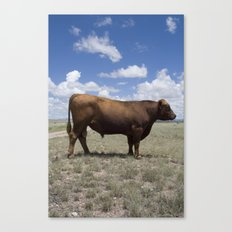 Bull, Texas Canvas Print
