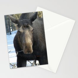 Moose Munching Poplar Lunch Stationery Cards