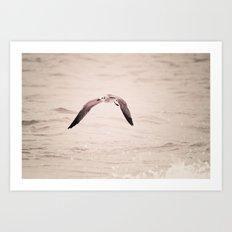 solo flight - seagull - beach Art Print