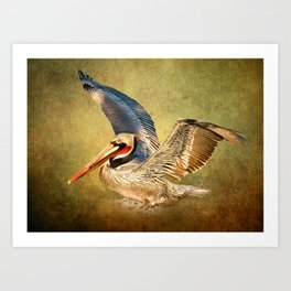 Flying Pelican On Fine Art Texture Art Print