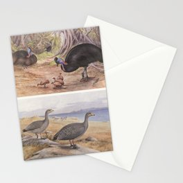 Neville W. Cayley - What Bird Is That? (1931) - Southern Cassowary and Cape Barron Goose Stationery Cards