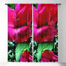 Blushing Gladiola Blackout Curtain