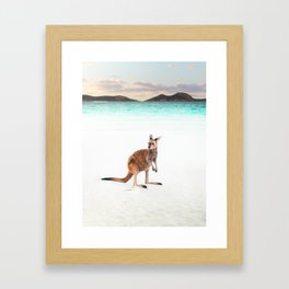 Kangaroo on a beach, Lucky Bay Western Australia Framed Art Print
