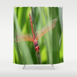 Closeup of Red Skimmer or Firecracker Dragonfly Shower Curtain