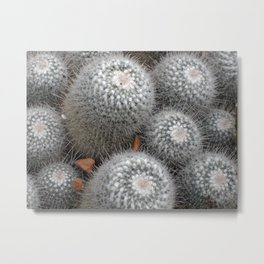 Little Cactai Metal Print