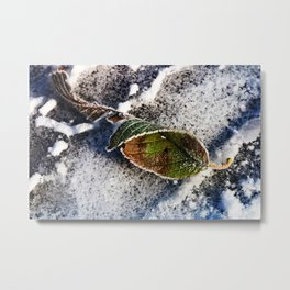 Feeling the Frost Metal Print