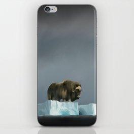 Muskox Chillin' on an Iceberg iPhone Skin
