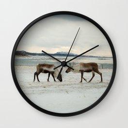 Reindeer in Lofoten, Norway. Wall Clock