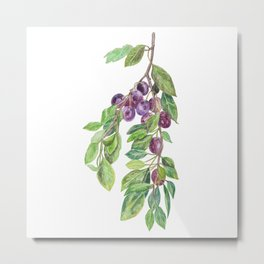 A plum tree branch Metal Print
