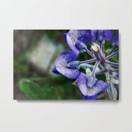Lupine Petals Photography Print Metal Print